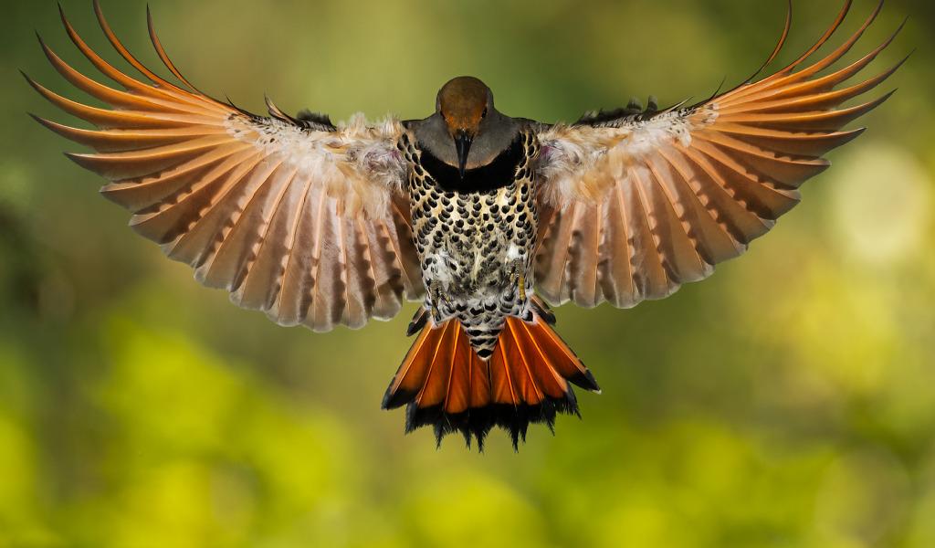ptica zolotoy shiloklyuvyy[1]