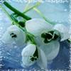 Варенье из разных ягод - последнее сообщение от Asianka